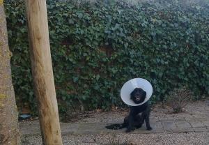Perro lesionado en Peludos Residencia Canina y Felina