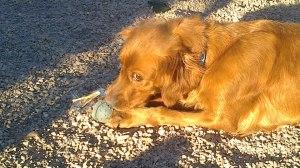 Perro de acogida en Peludos Residencia Canina y Felina