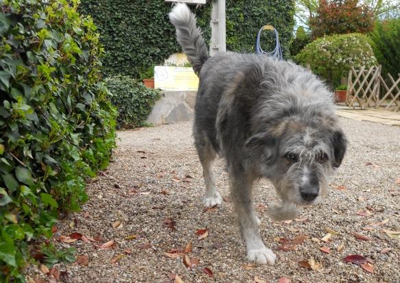 Perro paseando en Peludos Residencia Canina y Felina