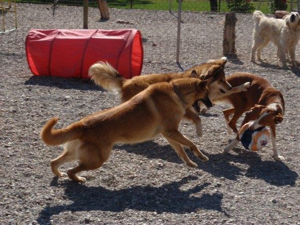 Perros jugando en Peludos Residencia Canina y Felina