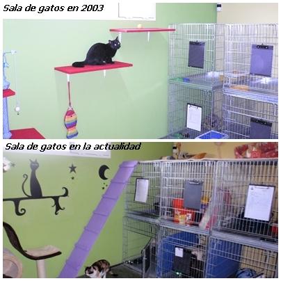 Sala de Gatos en Peludos Residencia Canina y Felina