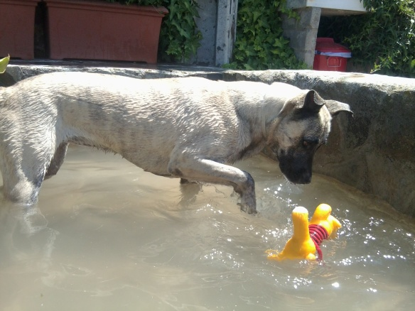 Perro en el estanque de Peludos Residencia Canina y Felina