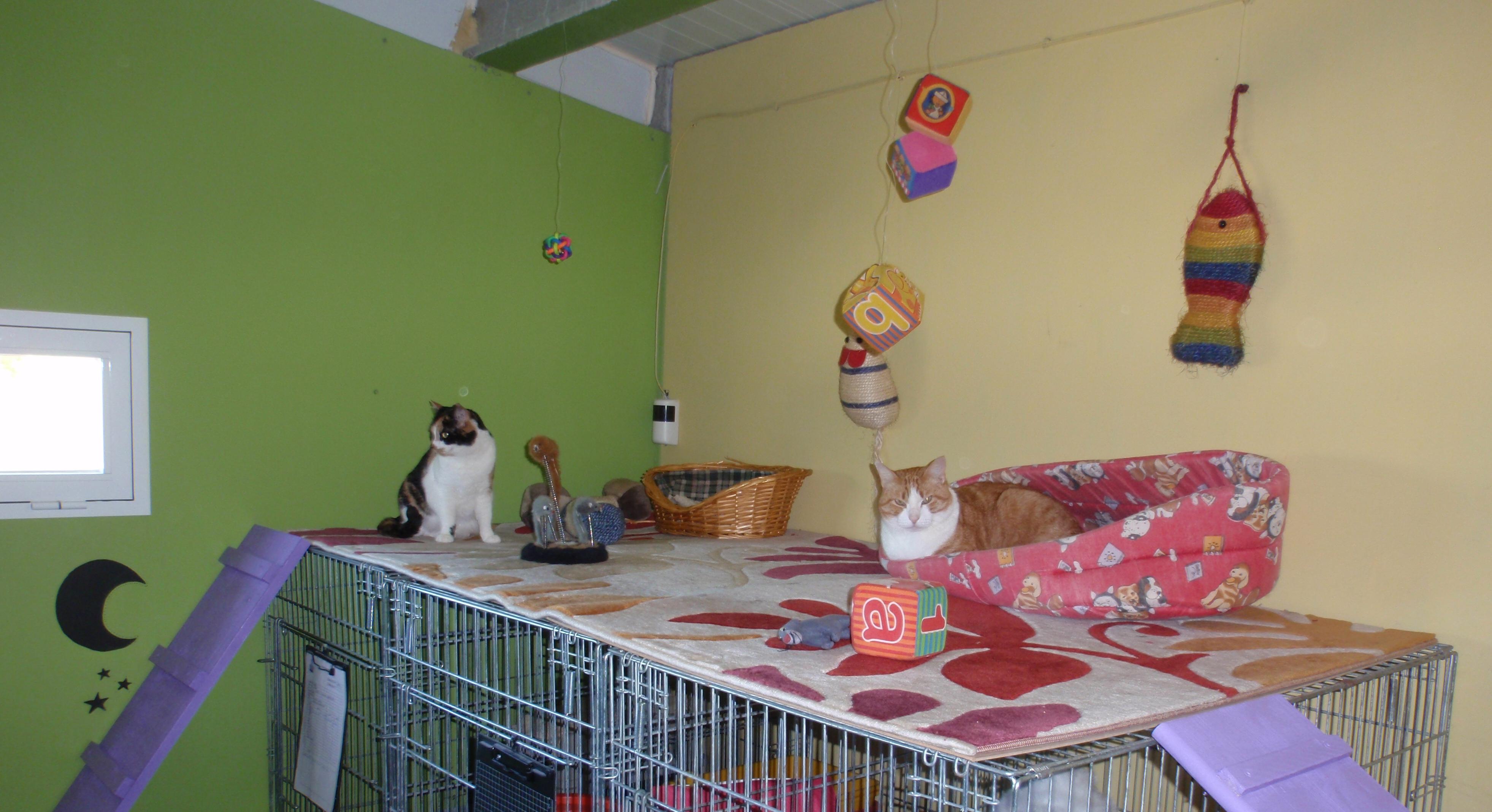 Peludo en la sala de Gatos de Peludos Residencia Canina y Felina