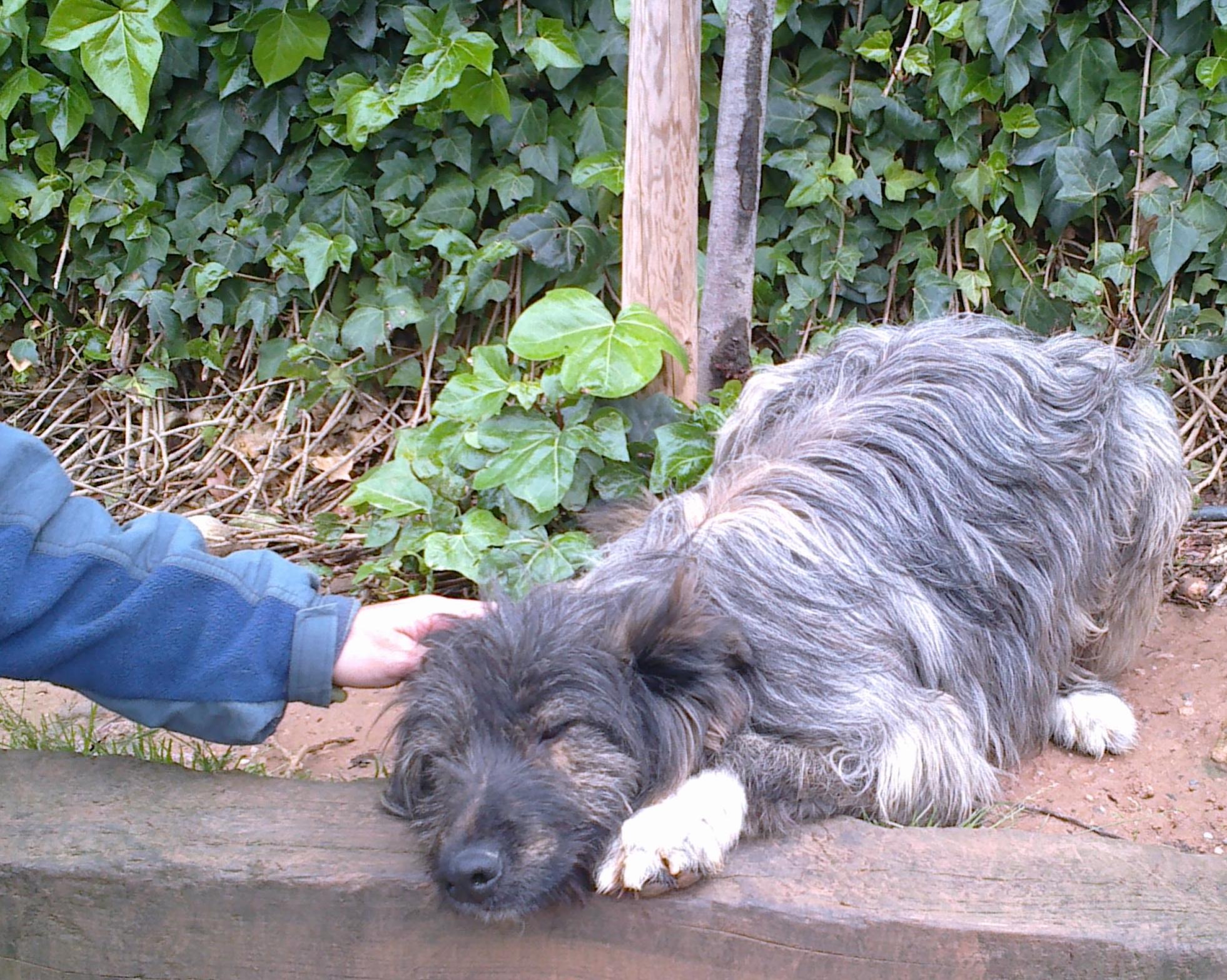 Perro tumbado en Peludos Hotel Felino