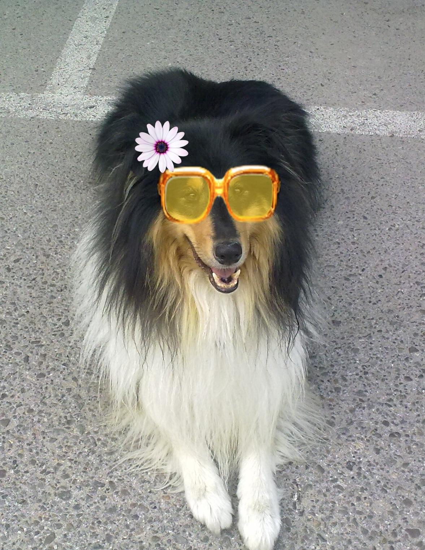 Perro cliente de Peludos Residencia Canina y Felina