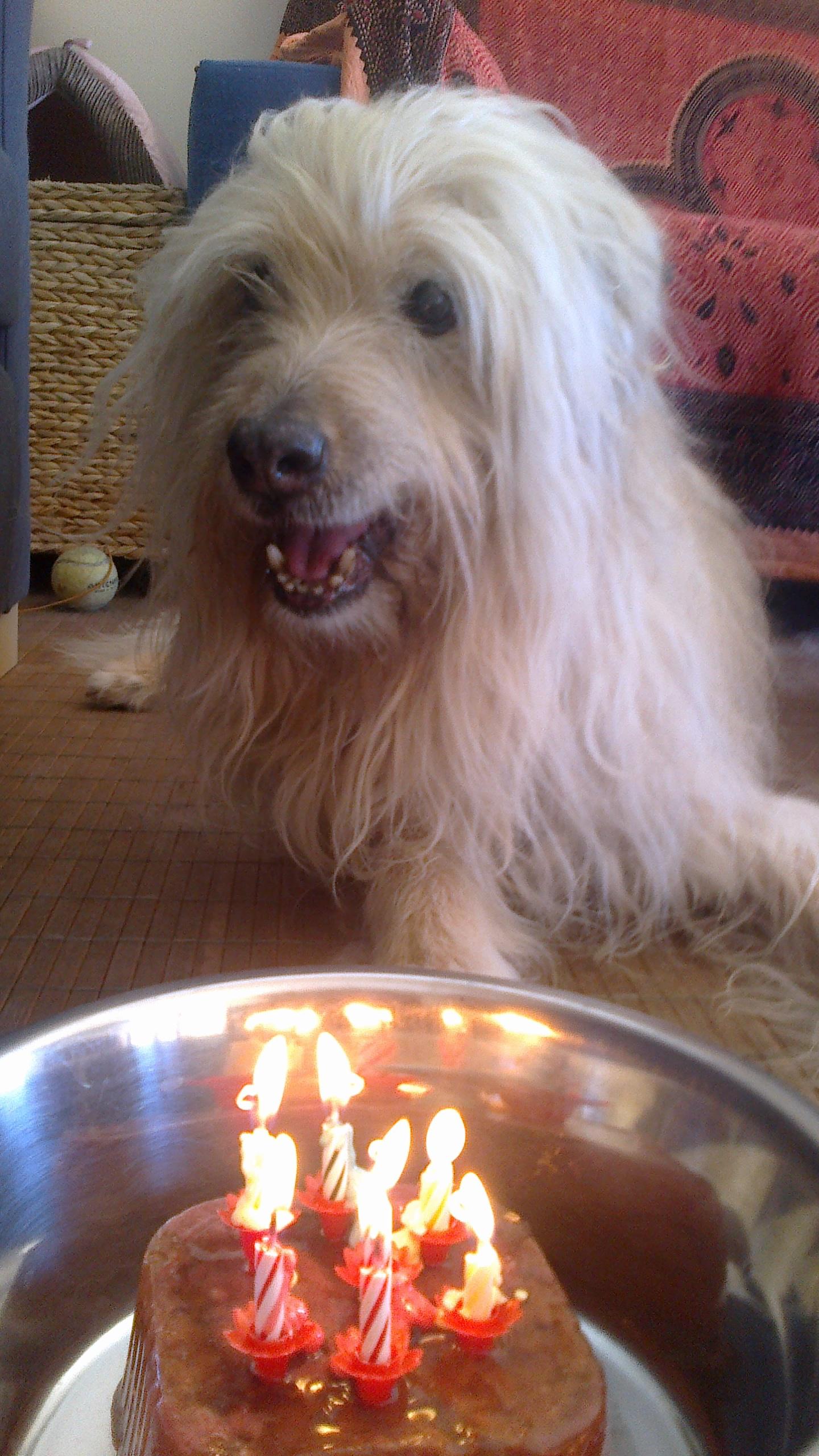Perro con una tarda de cumpleaños en Peludos Hotel Felino