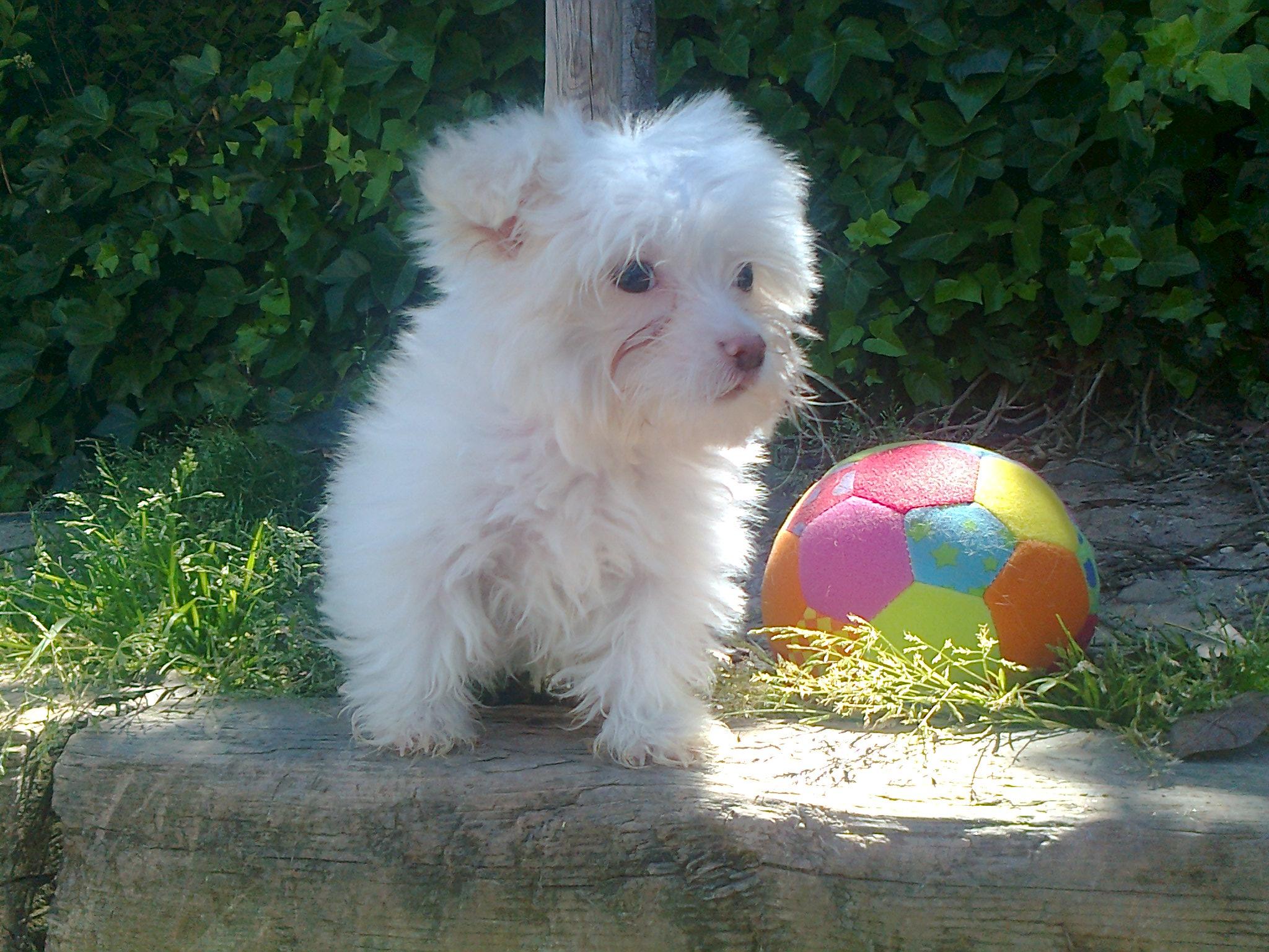 Perro en el estanque de Peludos Residencia Canina y Felina con un balón duro