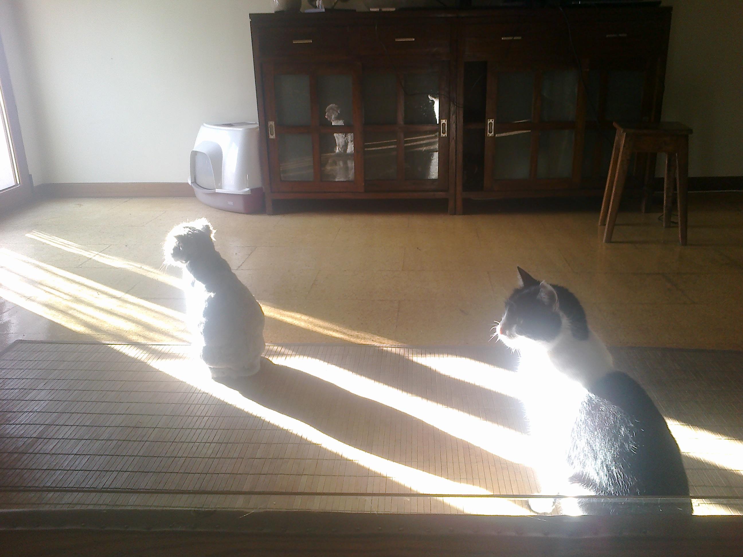 Dos Gatos en casa