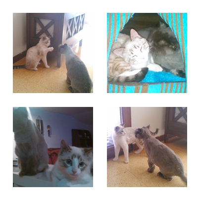 Gatos jugando en casa