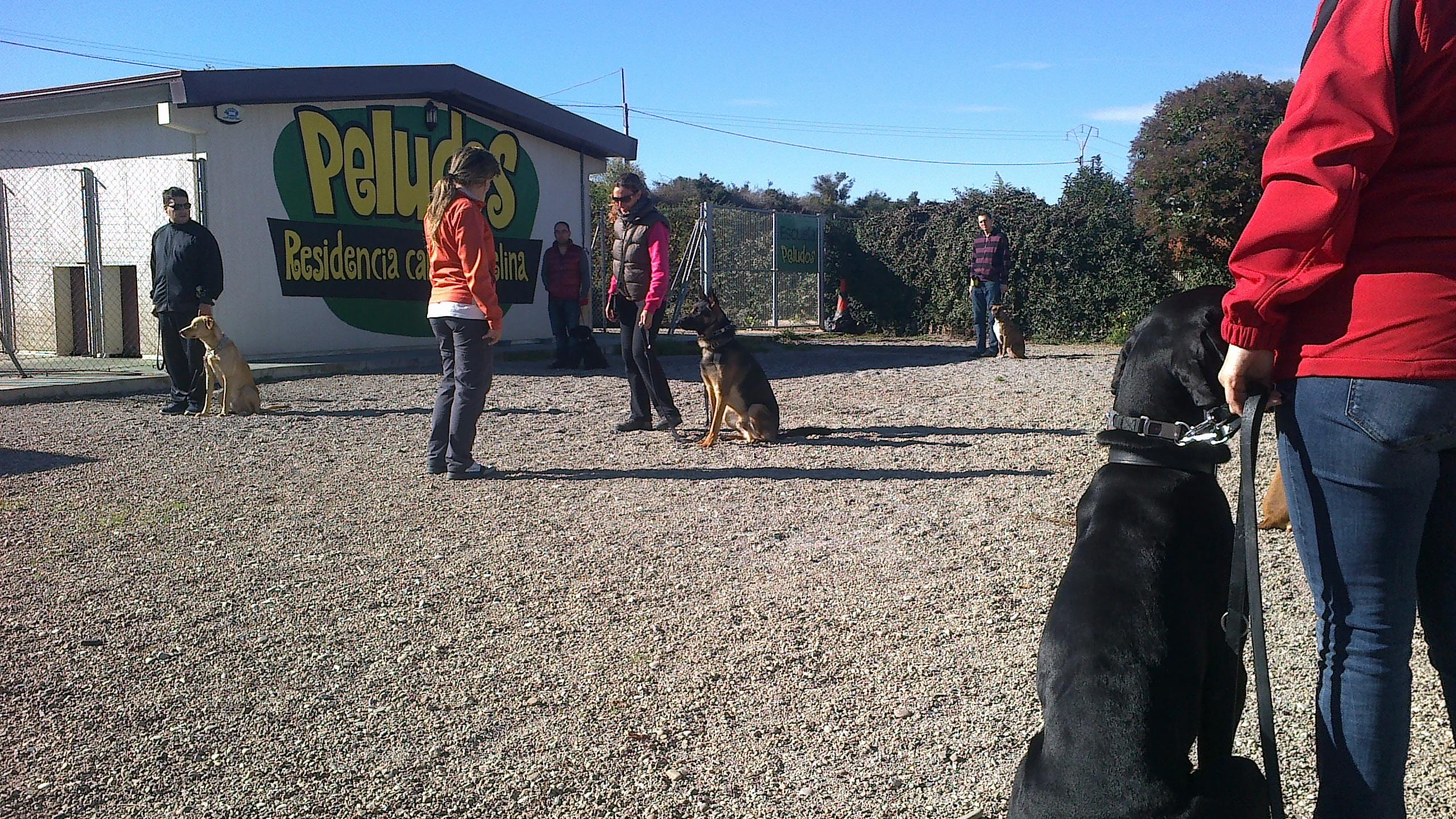 Escuela de Adiestramiento en Peludos Hotel Canino y Felino
