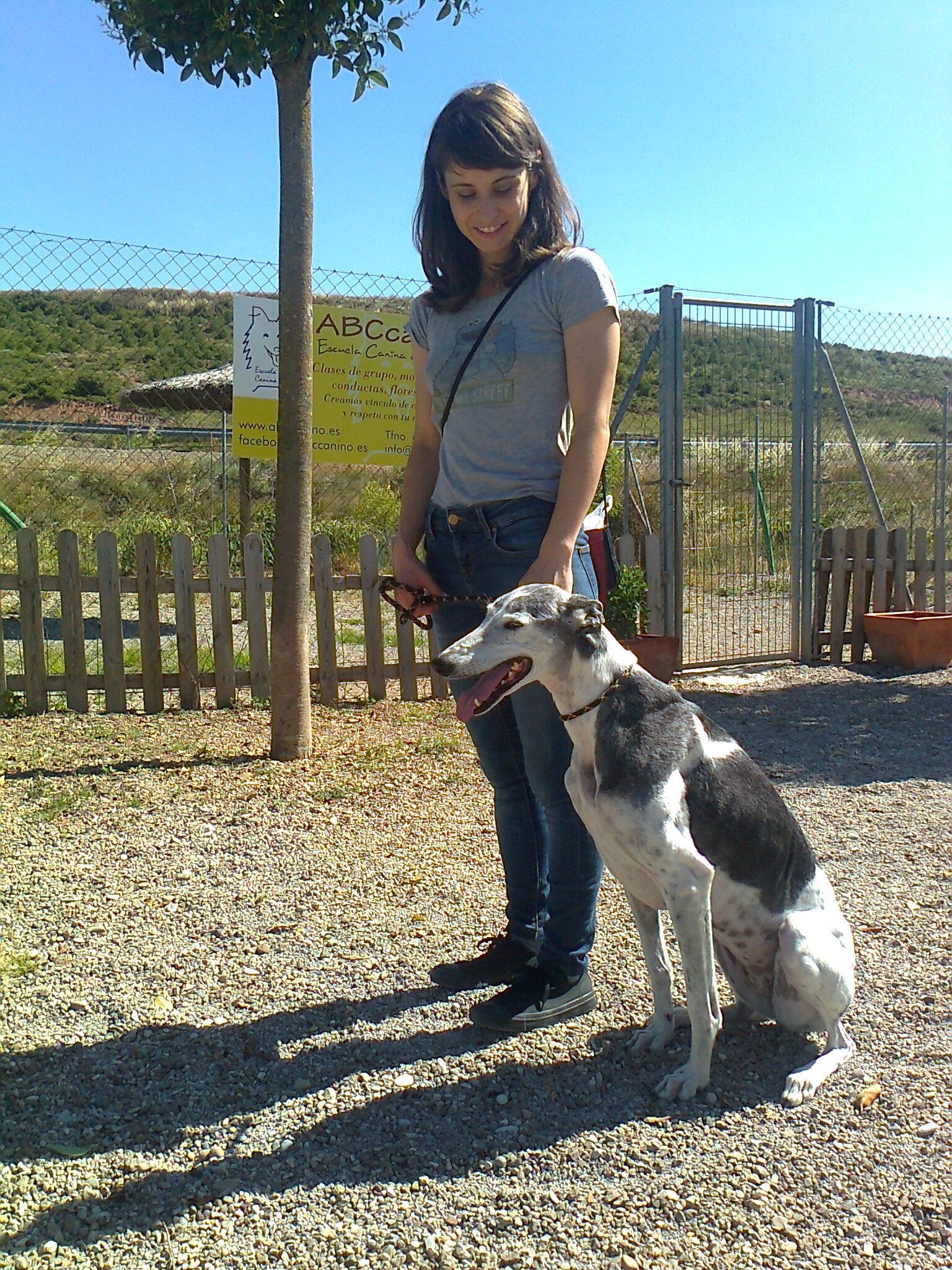 Perro en la Escuela de Adiestramiento de Residencia Peludos