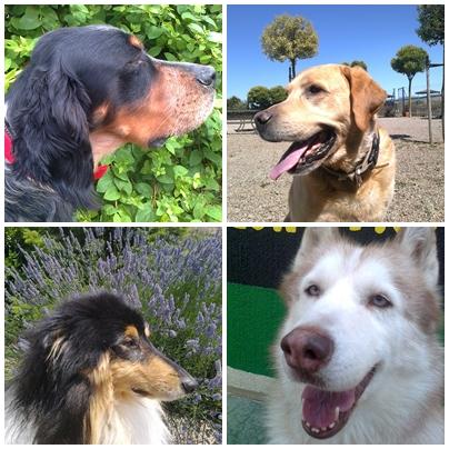Perros en Residencia Canina y Felina Peludos