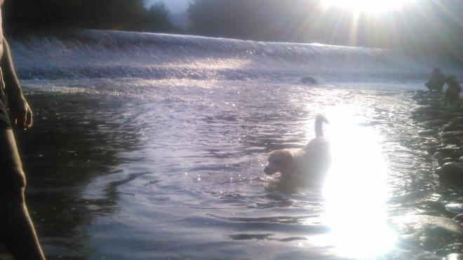 Peludos bañándose en un pantano.