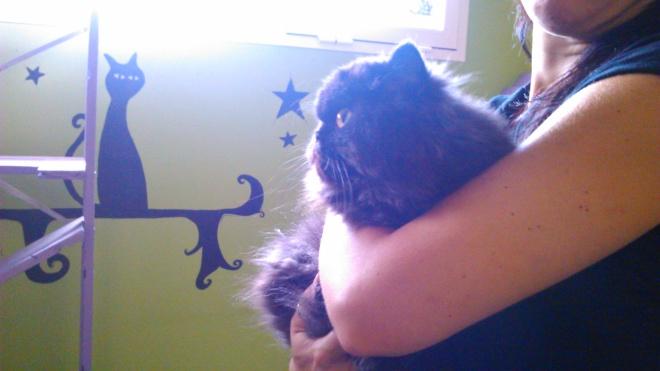 Gato persa en Peludos